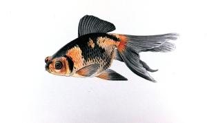 Demekin_goldfish_plate (1)