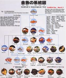Japon balıklarının soyağacı